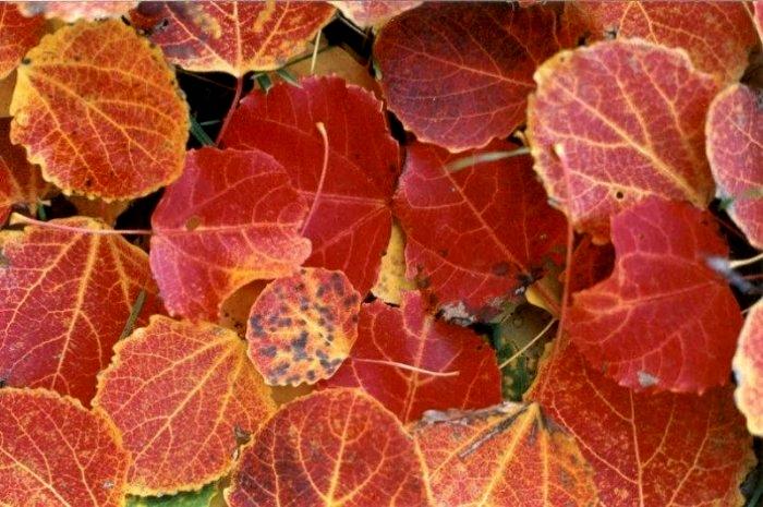 El otoño en Valdanzuelo